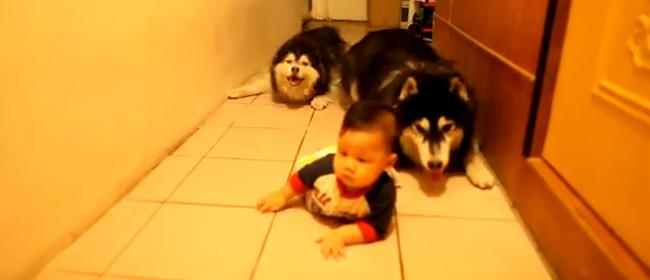 Kako psi imitiraju bebu