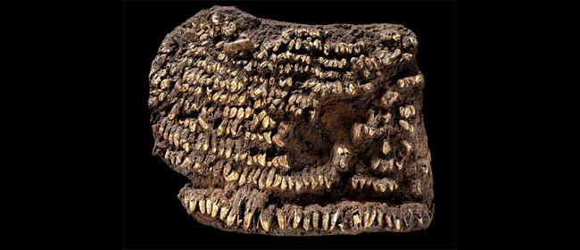 Otkrivena najstarija tašnica