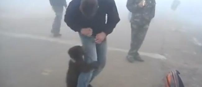 Stašan napad medveda