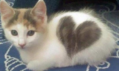10 svetski poznatih mačaka