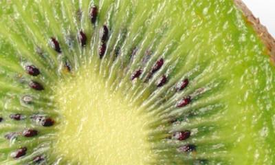 Gde se sve krije Genetski modifikovana hrana