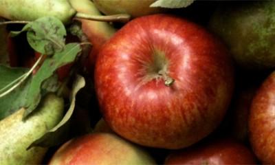 Ni jedno voće nije tako zdravo kao ovo  %Post Title