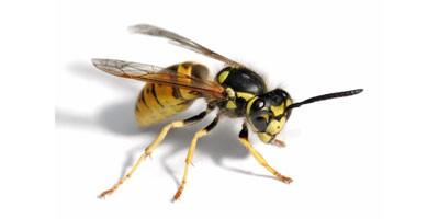 Insekti za ručak