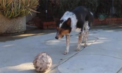 Najpametniji pas na svetu  %Post Title