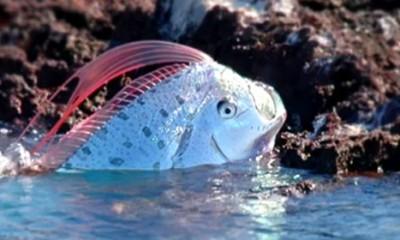 Ova riba bi vas na smrt prepala