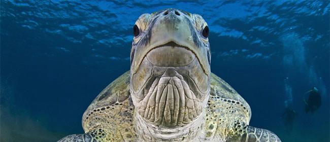 Najbolje podvodne fotografije