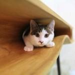 Sto za mačke