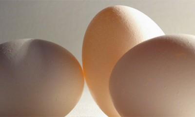 Koja je razlika između belih i smeđih jaja?