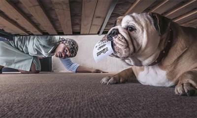Keksi koje psi stvarno vole