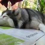 Preslatki pas koji je odrastao sa mačkama