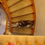Preslatki pas koji je odrastao sa mačkama  %Post Title