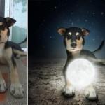 Divni portreti pasa koji čekaju novi dom