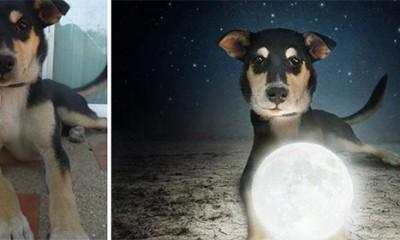 Divni portreti pasa koji čekaju novi dom  %Post Title