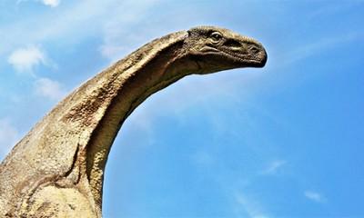 5 najstrašnijih i najvećih stvorenja iz prirode  %Post Title