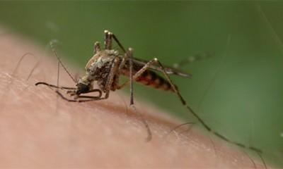 Komarci više grizu ove ljude  %Post Title
