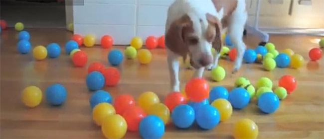Jedan pas i 100 loptica