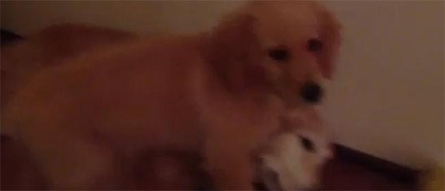 Veliki pas je imao noćnu moru, a mali pas ga je utešio