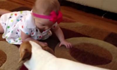 Ljubav bebe i psa