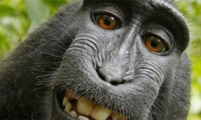 Ova fotka je ipak majmunovo vlasništvo