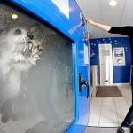 Pranje ljubimaca
