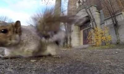 Veverica ukrala GoPro