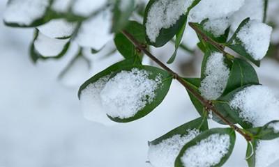 Stigao ledeni talas, sneg na Zlatiboru i Kopaoniku