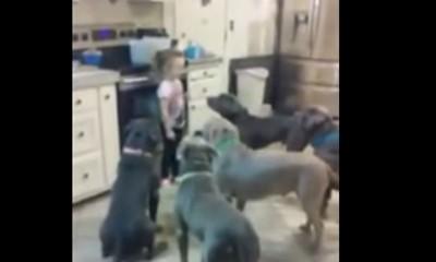 Ova devojčica baš ume s psima
