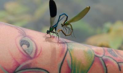 Tetoviranje je ipak opasno  %Post Title