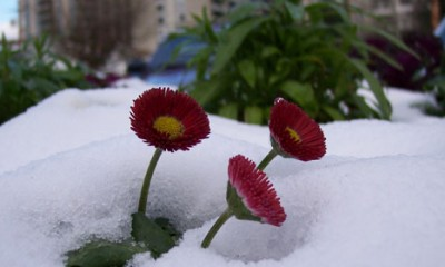 Ponovo stiže sneg  %Post Title