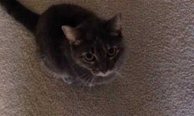 Ova mačka luduje  %Post Title