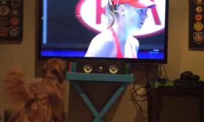 Pas koji stvarno voli tenis  %Post Title