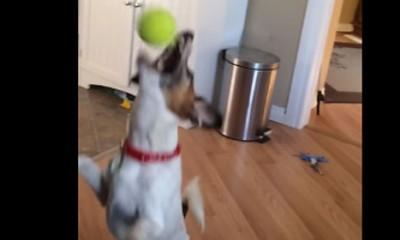 Pas sa stvarno posebnom veštinom  %Post Title