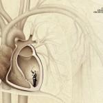 Anatomske reklame