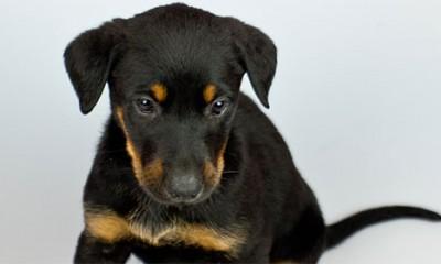 Zašto vlasnici liče na svoje pse?  %Post Title
