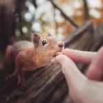 Preslatke životinje grickaju