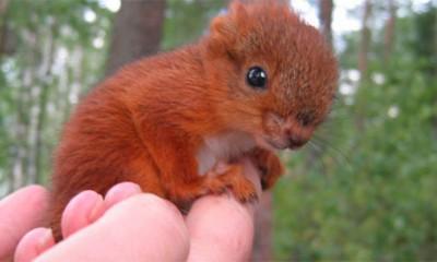 Divna priča o teško povređenoj veverici