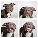 Psi u foto kiosku  %Post Title