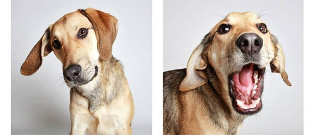 Psi u foto kiosku