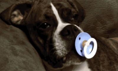 Psi su velike bebe  %Post Title