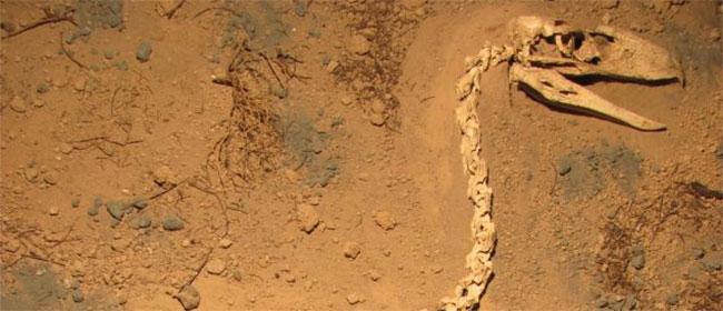 Otkriven najbolji skelet džinovske ptice