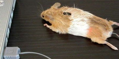 Krzno od miša za kompjuter