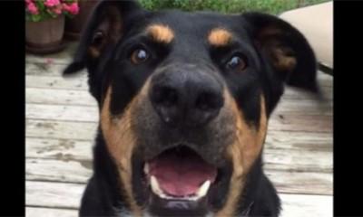 Pas koji zna da šapuće  %Post Title