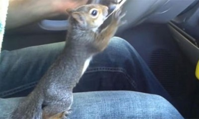 Ova slatka veverica baš i ne veruje vozaču