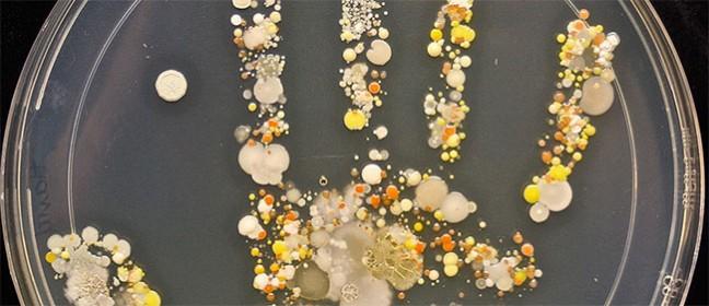 Čudesni otisak nacrtan bakterijama