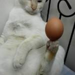 Ova mačka bolje žonglira od vas  %Post Title