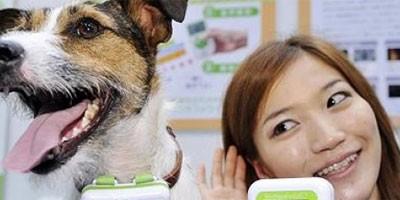 Prevodilac za pse