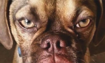 Sad je tu i Grumpy pas
