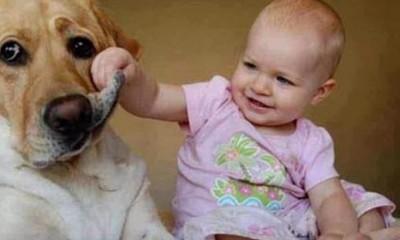 Šta znači kada vas pas ne gleda u oči  %Post Title