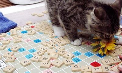 15 super zanimljivih činjenica o igri Scrabble  %Post Title