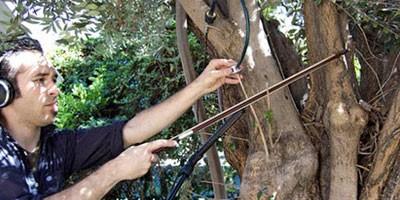 Čovek svira na drvetu